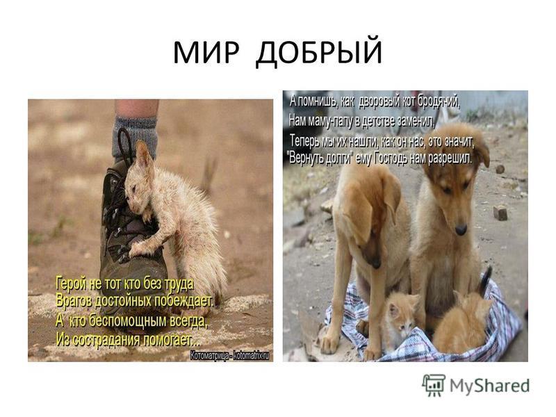 МИР ДОБРЫЙ