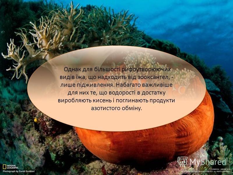 Однак для більшості рифоутворюючих видів їжа, що надходить від зооксантел, - лише підживлення. Набагато важливіше для них те, що водорості в достатку виробляють кисень і поглинають продукти азотистого обміну.