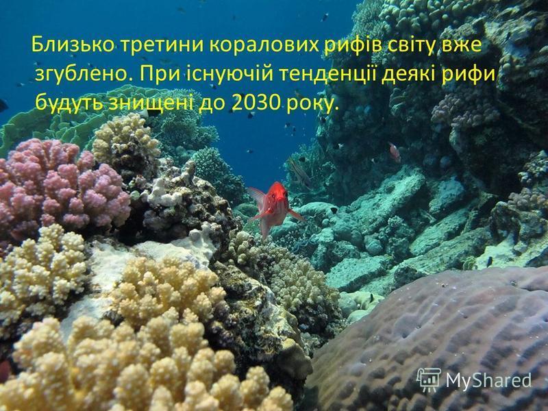 Близько третини коралових рифів світу вже згублено. При існуючій тенденції деякі рифи будуть знищені до 2030 року.