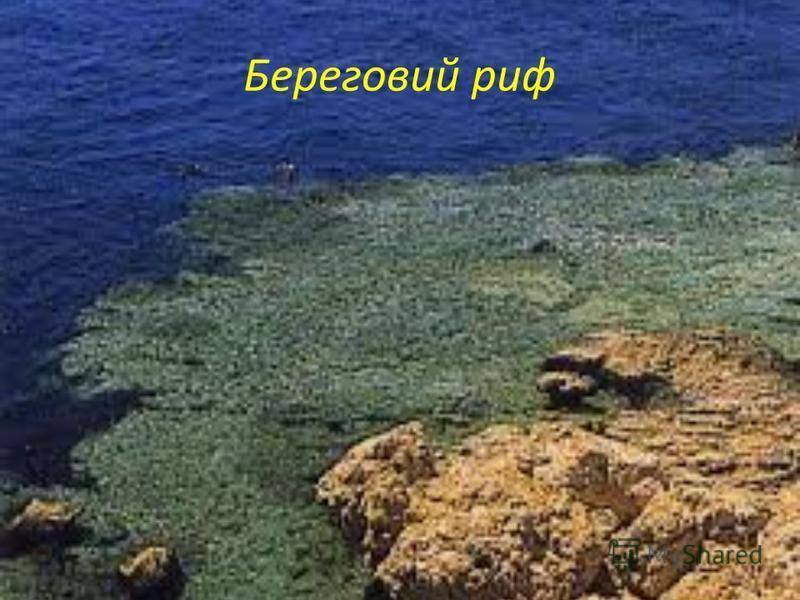 Береговий риф