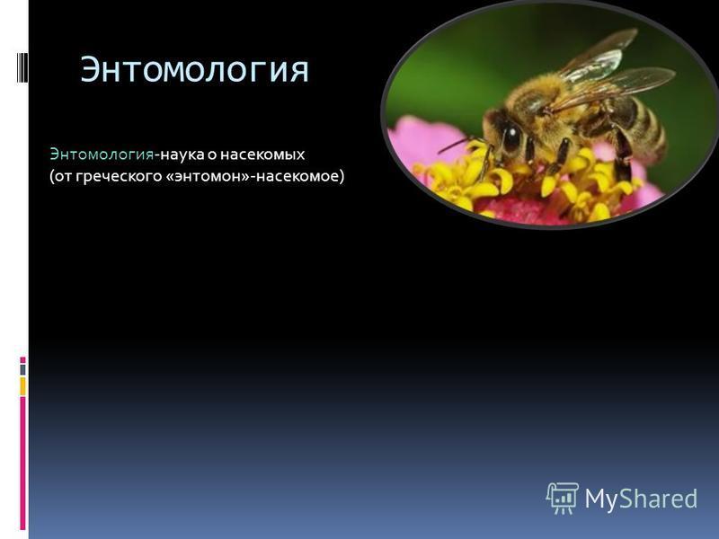 Энтомология Энтомология-наука о насекомых (от греческого «энтомон»-насекомое)
