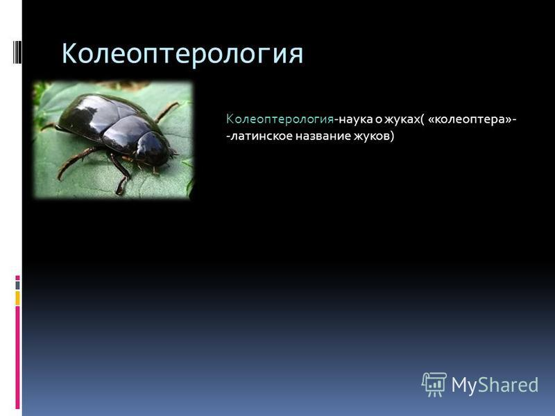 Колеоптерология Колеоптерология-наука о жуках( «колеоптера»- -латинское название жуков)