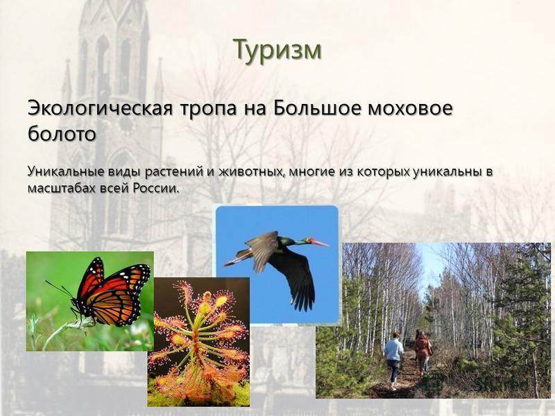 Туризм Экологическая тропа на Большое моховое болото Уникальные виды растений и животных, многие из которых уникальны в масштабах всей России.
