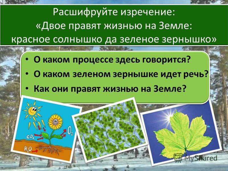 О каком процессе здесь говорится? О каком зеленом зернышке идет речь? Как они правят жизнью на Земле? Расшифруйте изречение: «Двое правят жизнью на Земле: красное солнышко да зеленое зернышко»