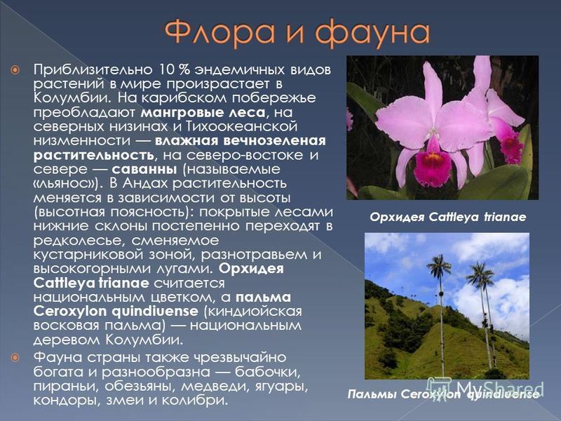Приблизительно 10 % эндемичных видов растений в мире произрастает в Колумбии. На карибском побережье преобладают мангровые леса, на северных низинах и Тихоокеанской низменности влажная вечнозеленая растительность, на северо-востоке и севере саванны (