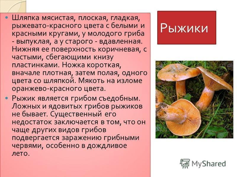 Рыжики Шляпка мясистая, плоская, гладкая, рыжевато - красного цвета с белыми и красными кругами, у молодого гриба - выпуклая, а у старого - вдавленная. Нижняя ее поверхность коричневая, с частыми, сбегающими книзу пластинками. Ножка короткая, вначале