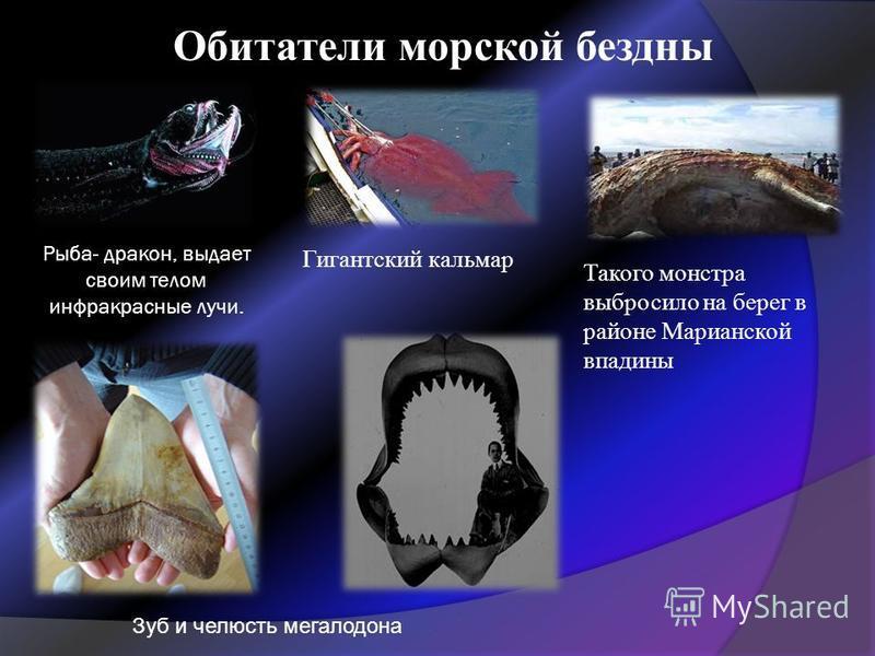 Рыба- дракон, выдает своим телом инфракрасные лучи. Гигантский кальмар Такого монстра выбросило на берег в районе Марианской впадины Зуб и челюсть мегалодона