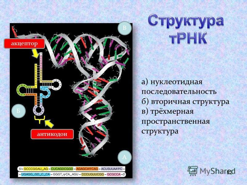 52 а) нуклеотидная последовательность б) вторичная структура в) трёхмерная пространственная структура А Б В антикодон акцептор