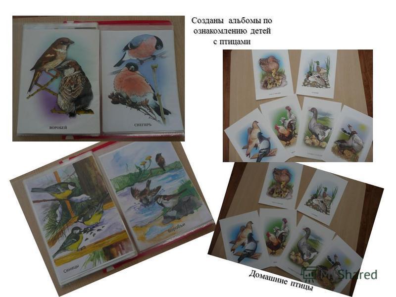Созданы альбомы по ознакомлению детей с птицами Домашние птицы
