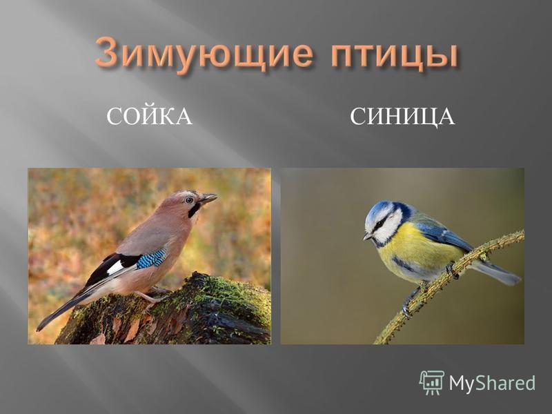 СОЙКАСИНИЦА
