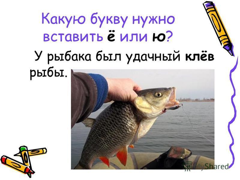 Какую букву нужно вставить ё или ю? У рыбака был удачный клёв рыбы.