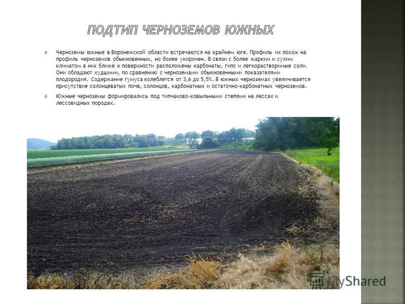 Черноземы южные в Воронежской области встречаются на крайнем юге. Профиль их похож на профиль черноземов обыкновенных, но более укорочен. В связи с более жарким и сухим климатом в них ближе к поверхности расположены карбонаты, гипс и легкорастворимые