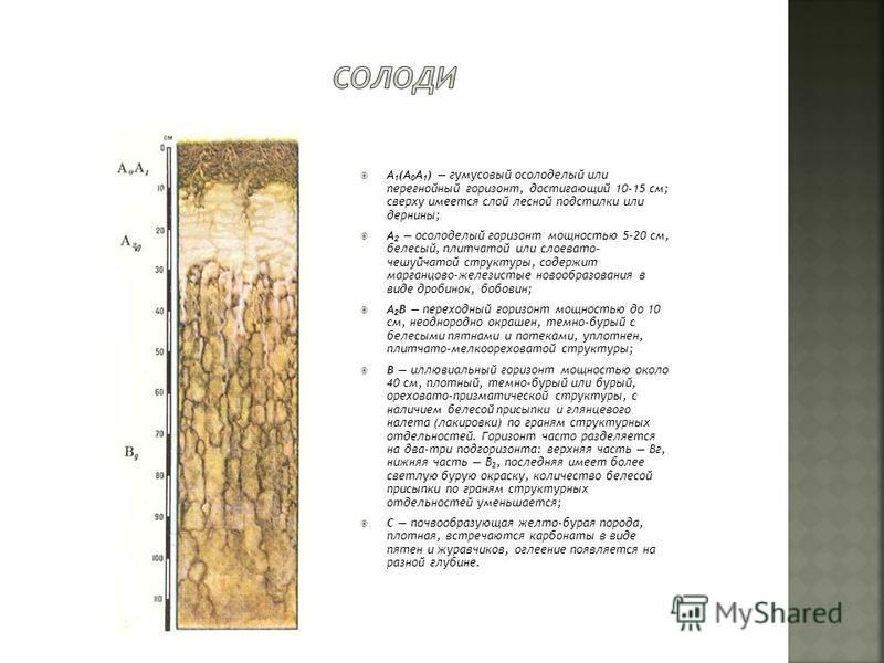 А 1 (А 0 А 1 ) гумусовый осолоделый или перегнойный горизонт, достигающий 10-15 см; сверху имеется слой лесной подстилки или дернины; А 2 осолоделый горизонт мощностью 5-20 см, белесый, плитчатой или слоевато- чешуйчатой структуры, содержит марганцов