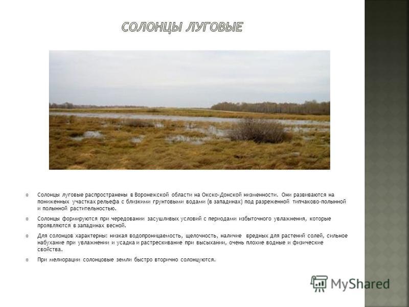 Солонцы луговые распространены в Воронежской области на Окско-Донской низменности. Они развиваются на пониженных участках рельефа с близкими грунтовыми водами (в западинах) под разреженной типчаково-полынной и полынной растительностью. Солонцы формир
