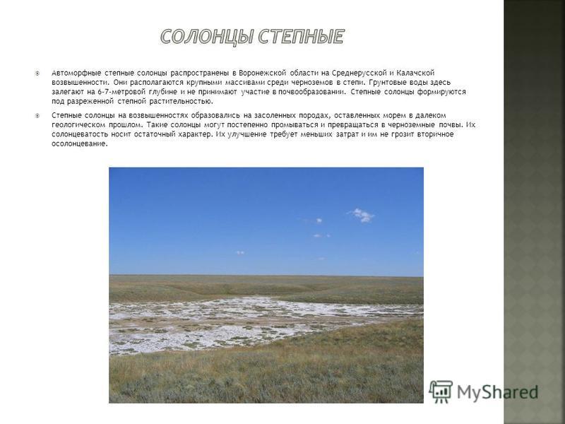 Автоморфные степные солонцы распространены в Воронежской области на Среднерусской и Калачской возвышенности. Они располагаются крупными массивами среди черноземов в степи. Грунтовые воды здесь залегают на 6-7-метровой глубине и не принимают участие в