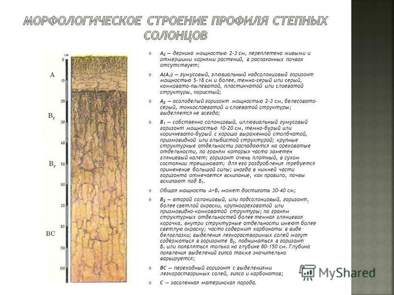 A d дернина мощностью 2-3 см, переплетена живыми и отмершими корнями растений, в распаханных почвах отсутствует; A(A 1 ) гумусовый, элювиальный надсолонцовый горизонт мощностью 5-18 см и более, темно-серый или серый, комковато-пылеватой, пластинчатой