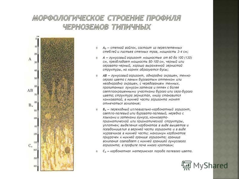 A 0 степной войлок, состоит из переплетенных стеблей и листьев степных трав, мощность 3-4 см; А гумусовый горизонт мощностью от 60 до 100 (130) см, преобладает мощность 80-100 см, черный или серовато-черный, хорошо выраженной зернистой структуры, на