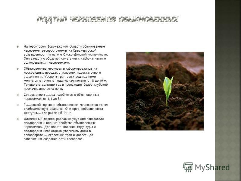 На территории Воронежской области обыкновенные черноземы распространены на Среднерусской возвышенности и на юге Окско-Донской низменности. Они зачастую образуют сочетания с карбонатными и солонцеватыми черноземами. Обыкновенные черноземы сформировали