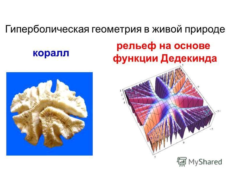Гиперболическая геометрия в живой природе коралл рельеф на основе функции Дедекинда