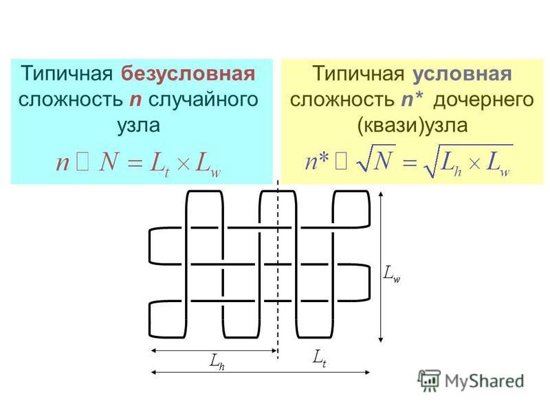 Типичная безусловная сложность n случайного узла Типичная условная сложность n* дочернего (квази)узла