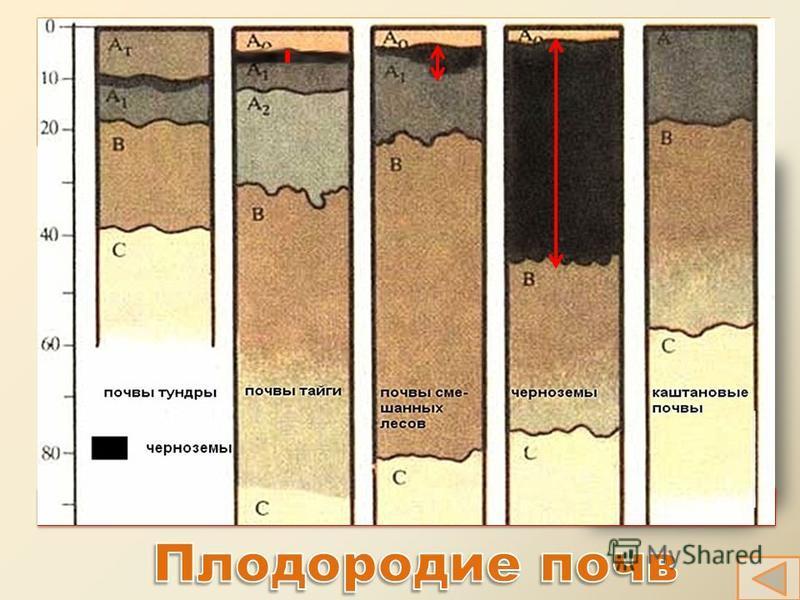 Плодородие почв Плодородие почв Механический состав почв состав почв Механический состав почв состав почв Структура почв почв Структура почв почв Основные свойства почв