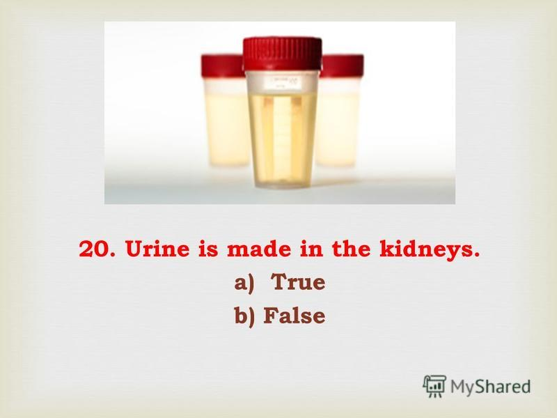 20. Urine is made in the kidneys. a) True b) False