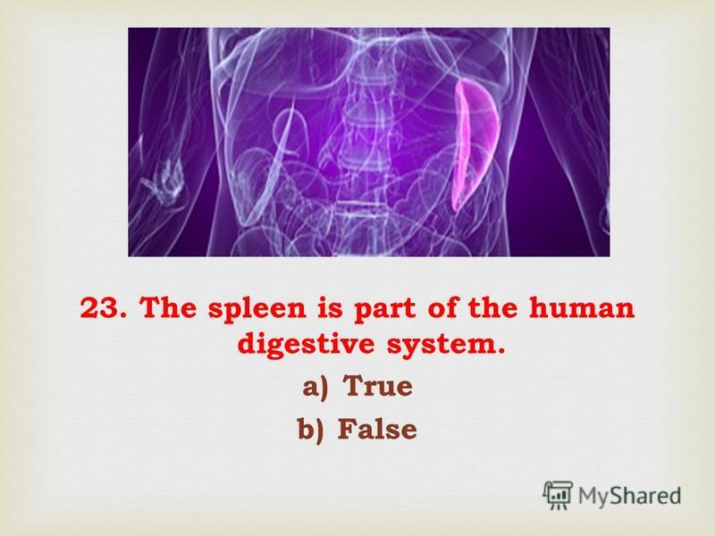 23. The spleen is part of the human digestive system. a)True b)False