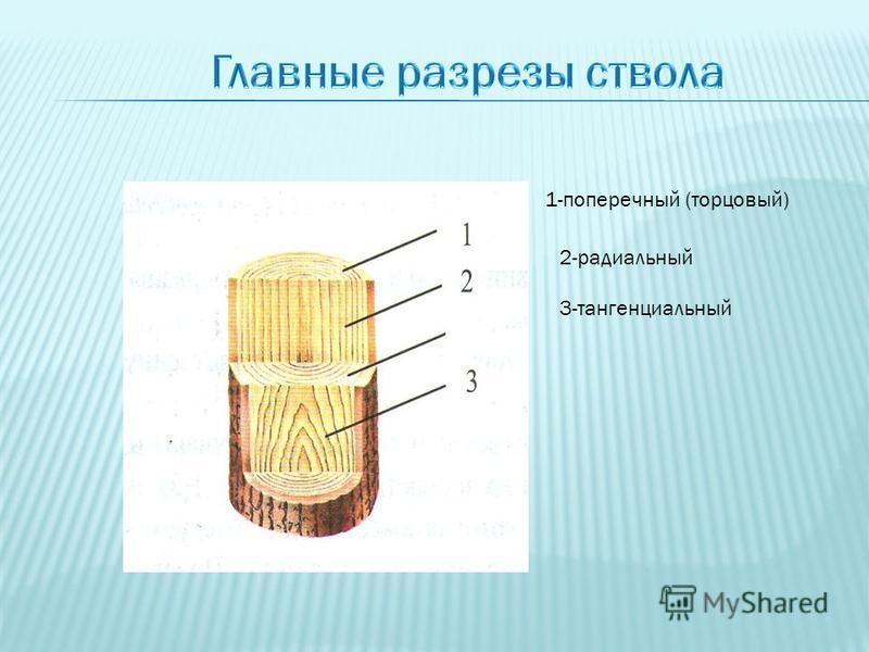 1-поперечный (торцовый) 2-радиальный 3-тангенциальный