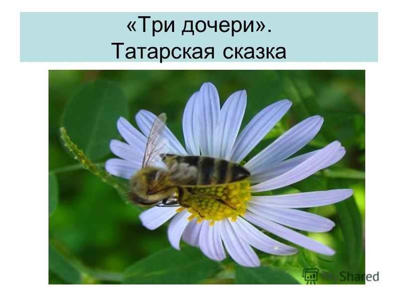 «Три дочери». Татарская сказка