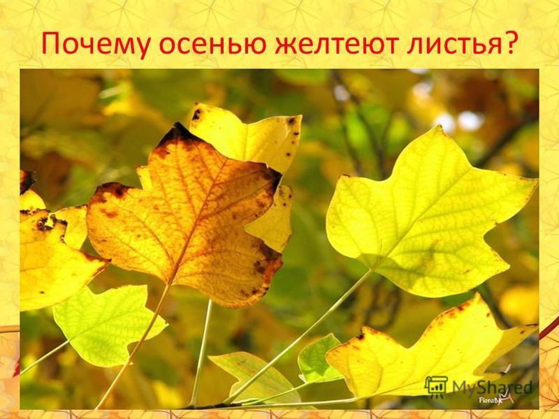 Почему осенью желтеют листья?