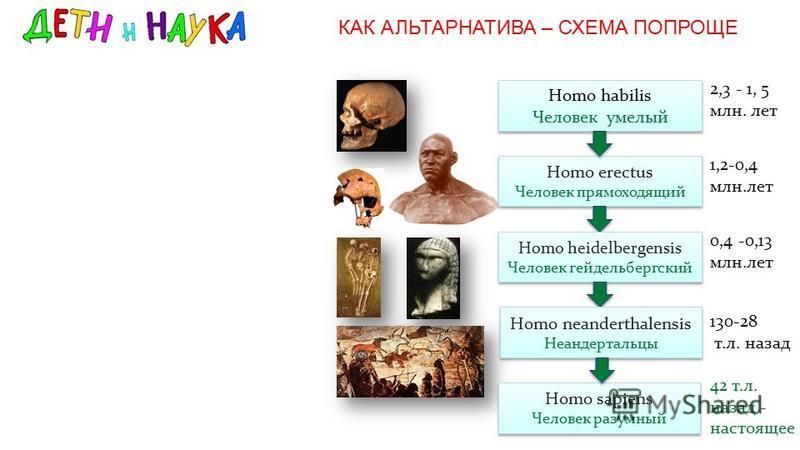 КАК АЛЬТАРНАТИВА – СХЕМА ПОПРОЩЕ Homo habilis Человек умелый Homo habilis Человек умелый 2,3 - 1, 5 млн. лет Homo erectus Человек прямоходящий Homo erectus Человек прямоходящий 1,2-0,4 млн.лет Homo heidelbergensis Человек гейдельбергский 0,4 -0,13 мл
