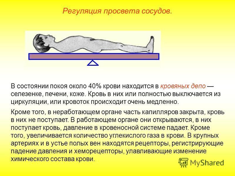 Регуляция просвета сосудов. В состоянии покоя около 40% крови находится в кровяных депо селезенке, печени, коже. Кровь в них или полностью выключается из циркуляции, или кровоток происходит очень медленно. Кроме того, в неработающем органе часть капи