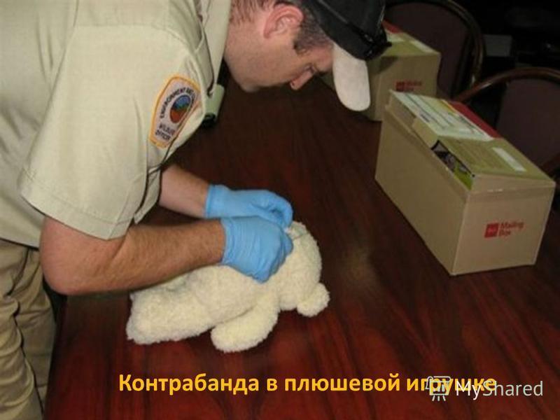 Контрабанда в плюшевой игрушке