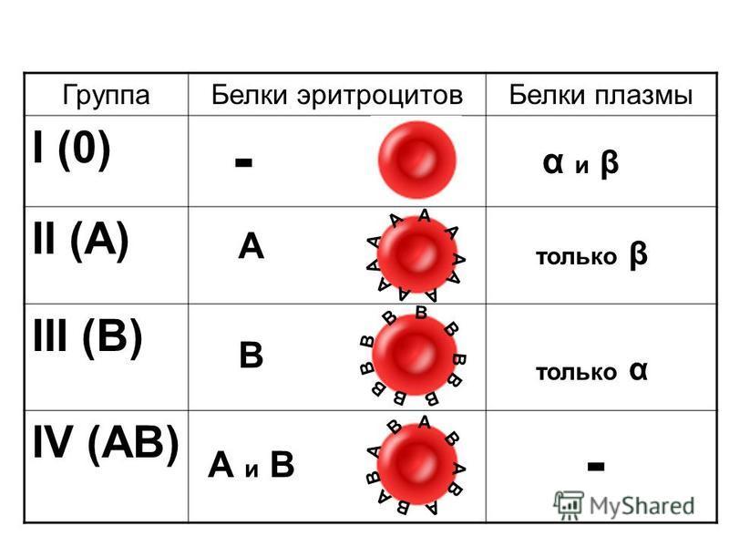Группа Белки эритроцитов Белки плазмы I (0) II (A) III (B) IV (AB) А А А А А А А А А А В В В В В В В В В В А В В А В А А В А В α и β только β только α - - А В А и В