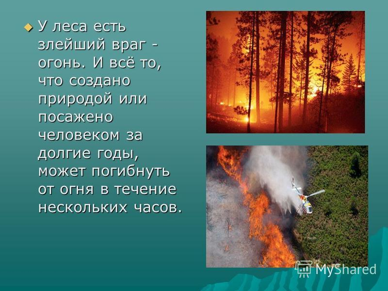 У леса есть злейший враг - огонь. И всё то, что создано природой или посажено человеком за долгие годы, может погибнуть от огня в течение нескольких часов. У леса есть злейший враг - огонь. И всё то, что создано природой или посажено человеком за дол