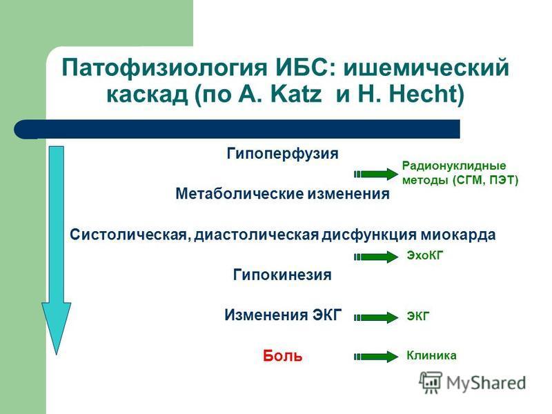 Патофизиология ИБС: ишемический каскад (по A. Katz и H. Hecht) Гипоперфузия Метаболические изменения Систолическая, диастолическая дисфункция миокарда Гипокинезия Изменения ЭКГ Боль Радионуклидные методы (СГМ, ПЭТ) ЭхоКГ ЭКГ Клиника