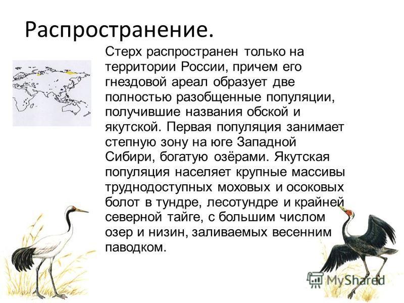 Распространение. Стерх распространен только на территории России, причем его гнездовой ареал образует две полностью разобщенные популяции, получившие названия обской и якутской. Первая популяция занимает степную зону на юге Западной Сибири, богатую о