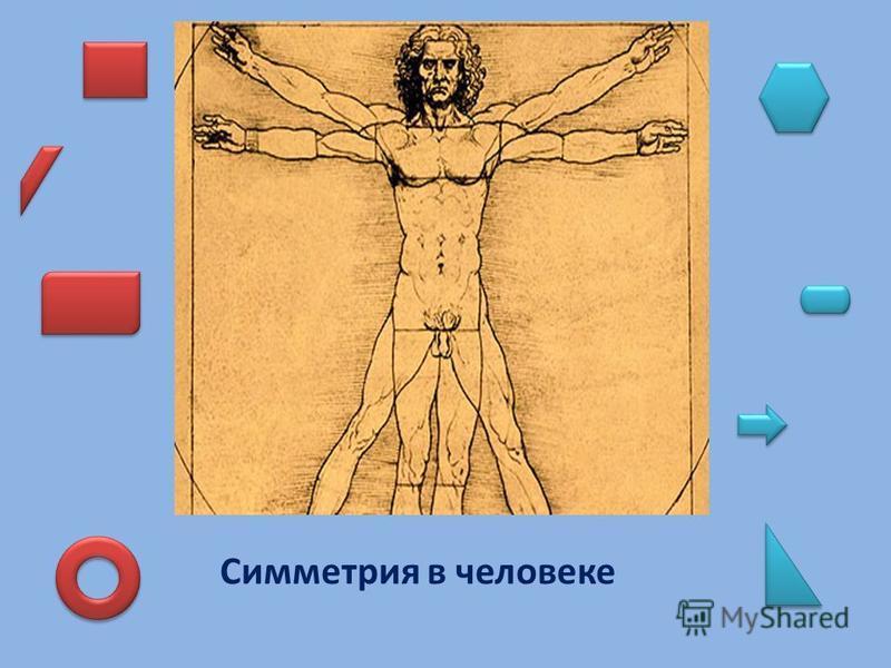 Симметрия в человеке