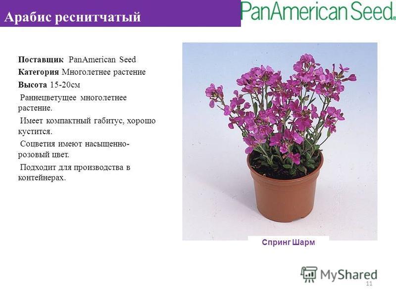 Поставщик PanAmerican Seed Категория Многолетнее растение Высота 15-20 см Раннецветущее многолетнее растение. Имеет компактный габитус, хорошо кустится. Соцветия имеют насыщенно- розовый цвет. Подходит для производства в контейнерах. 11 Арабис реснит