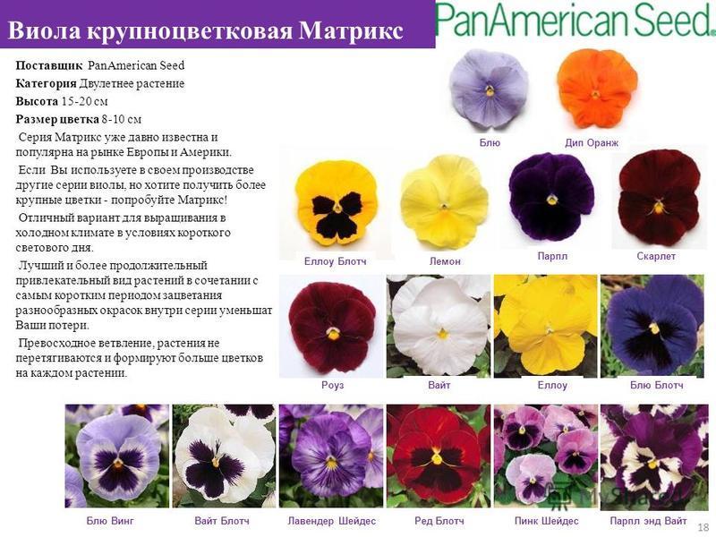 Поставщик PanAmerican Seed Категория Двулетнее растение Высота 15-20 см Размер цветка 8-10 см Серия Матрикс уже давно известна и популярна на рынке Европы и Америки. Если Вы используете в своем производстве другие серии виолы, но хотите получить боле