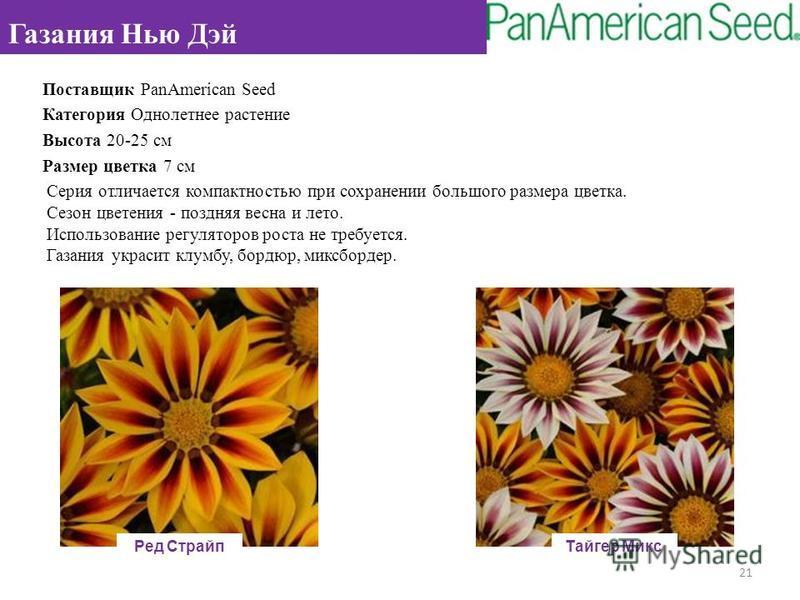 Поставщик PanAmerican Seed Категория Однолетнее растение Высота 20-25 см Размер цветка 7 см Серия отличается компактностью при сохранении большого размера цветка. Сезон цветения - поздняя весна и лето. Использование регуляторов роста не требуется. Га