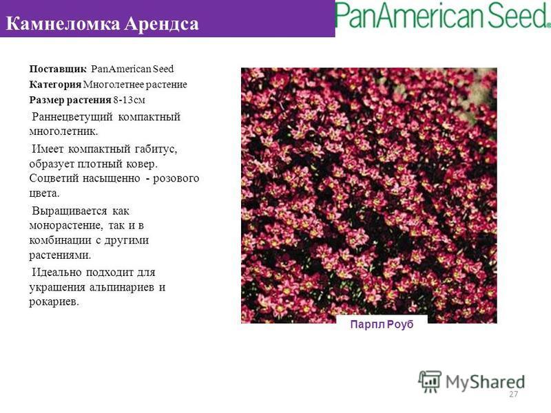 Поставщик PanAmerican Seed Категория Многолетнее растение Размер растения 8-13 см Раннецветущий компактный многолетник. Имеет компактный габитус, образует плотный ковер. Соцветий насыщенно - розового цвета. Выращивается как монорастение, так и в комб