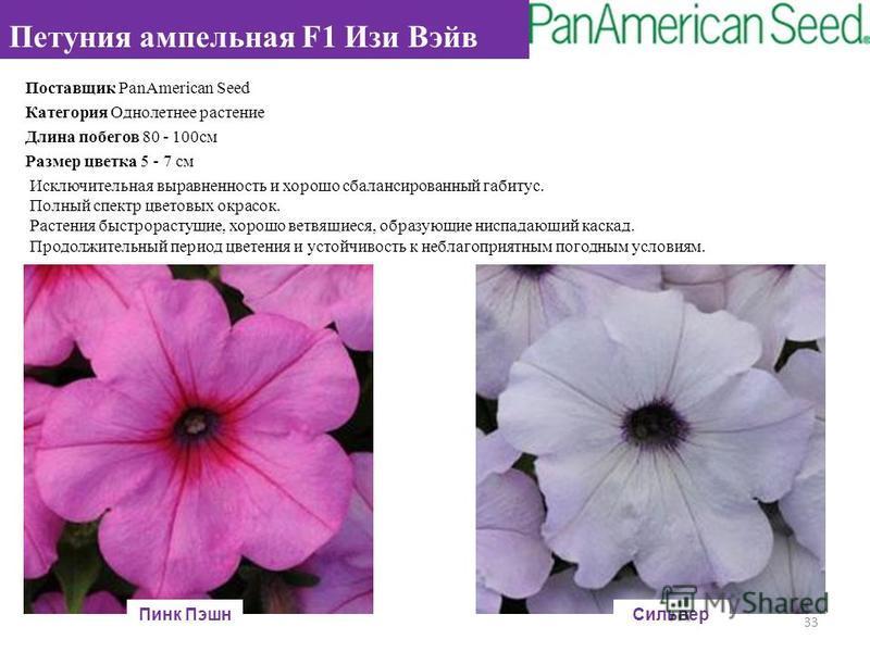 Поставщик PanAmerican Seed Категория Однолетнее растение Длина побегов 80 - 100 см Размер цветка 5 - 7 см Исключительная выравненность и хорошо сбалансированный габитус. Полный спектр цветовых окрасок. Растения быстрорастущие, хорошо ветвящиеся, обра