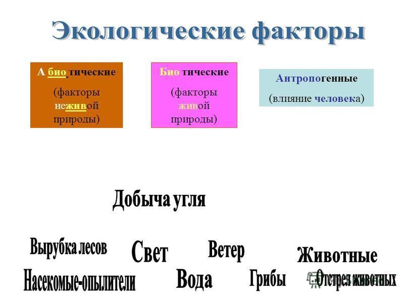 А био тические (факторы неживой природы) Био тические (факторы живой природы) Антропогенные (влияние человека)