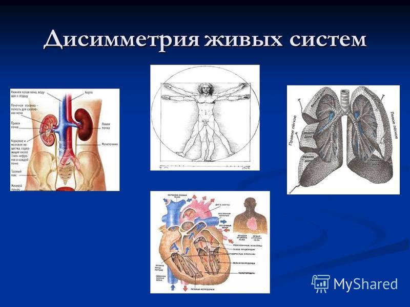 Дисимметрия живых систем