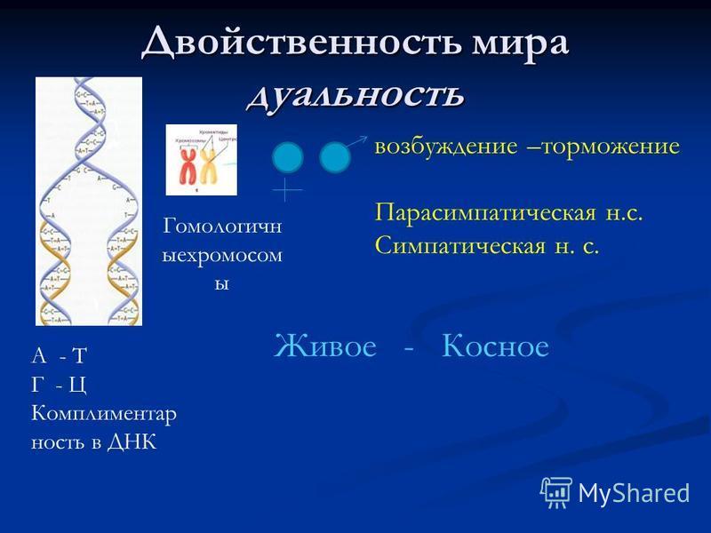 Двойственность мира дуальность А - Т Г - Ц Комплиментар ность в ДНК Гомологичн ыехромосом ы возбуждение –торможение Парасимпатическая н.с. Симпатическая н. с. Живое - Косное