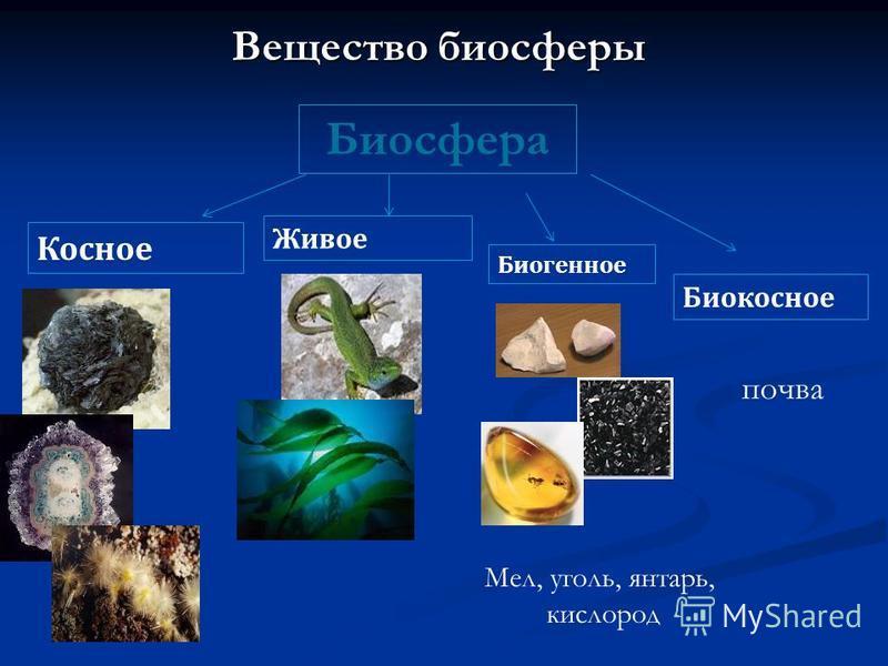 Вещество биосферы Биосфера Косное Живое Биогенное Биокосное Мел, уголь, янтарь, кислород почва
