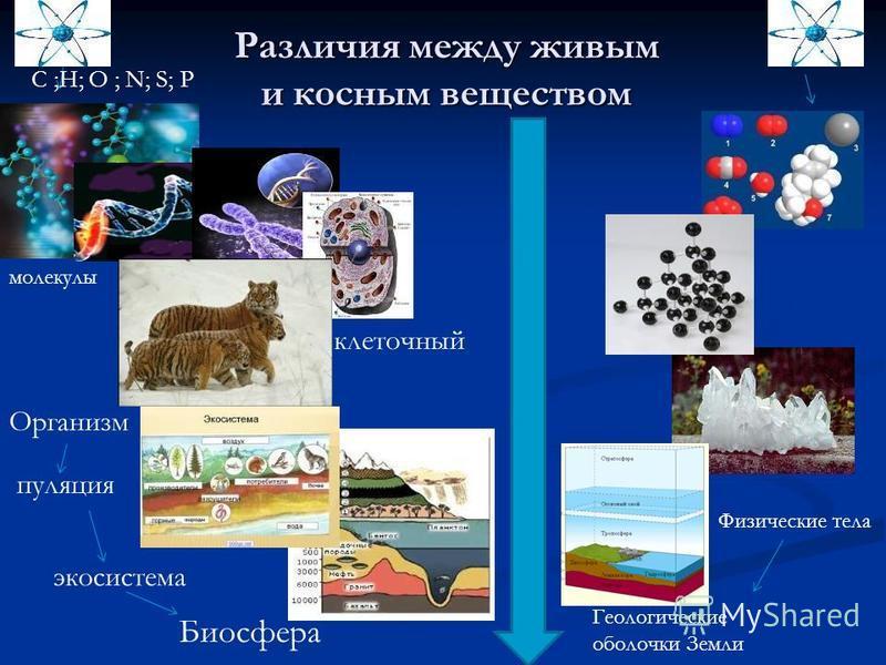Различия между живым и косным веществом Организм попопопуляция Биосфера экосистема Геологические оболочки Земли Физические тела C ;H; O ; N; S; P клеточный молекулы