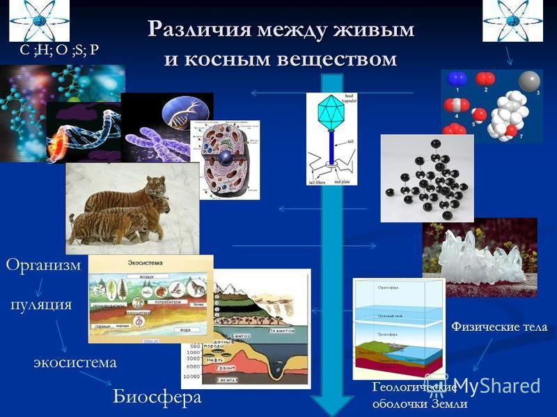 Различия между живым и косным веществом Организм попопопуляция Биосфера экосистема Геологические оболочки Земли Физические тела C ;H; O ;S; P