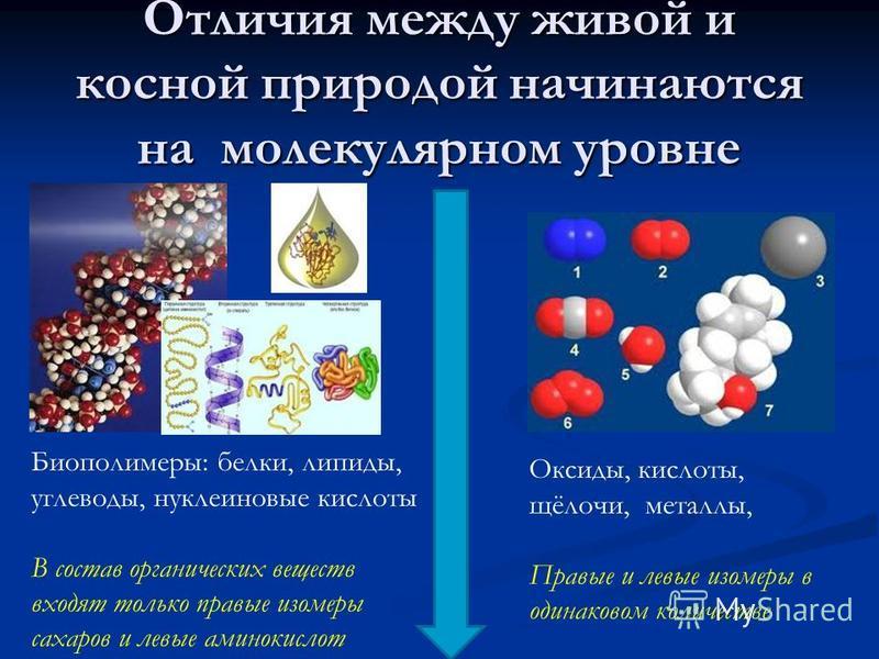 Отличия между живой и косной природой начинаются на молекулярном уровне Биополимеры: белки, липиды, углеводы, нуклеиновые кислоты В состав органических веществ входят только правые изомеры сахаров и левые аминокислот Оксиды, кислоты, щёлочи, металлы,